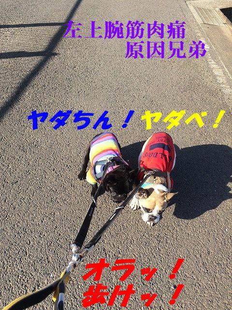 IMG_8803.jpg