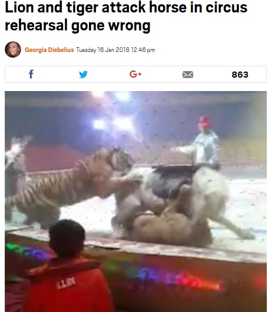 lion-and-tiger-attack-horse-in-circus-rehearsal.jpg