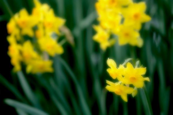春を焦がれて