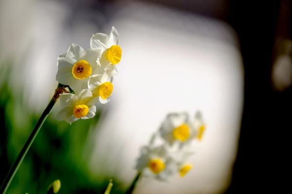 微かな春の香り