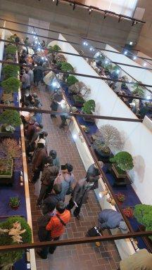 国風盆栽展の入場具合