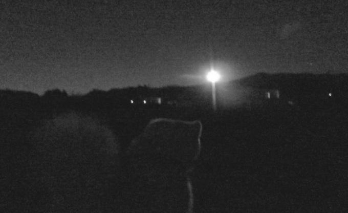 月あかりの散歩
