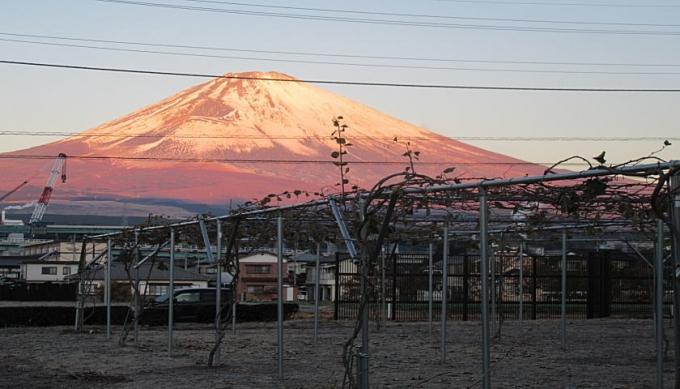 キウイ畑と富士山