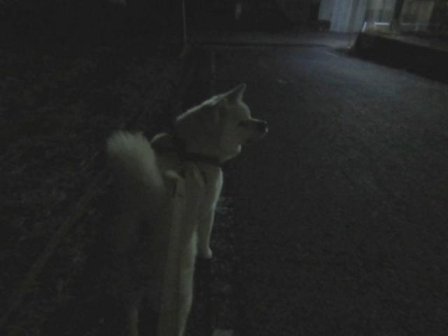 夜散歩サブ!
