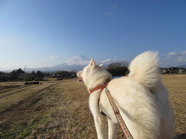 富士山と大福