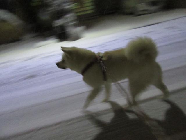 雪の中を駆け回る大福
