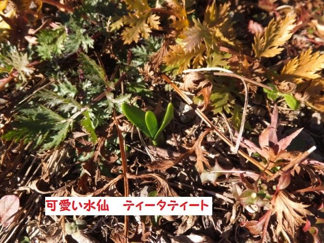 DSCF6199_1.jpg