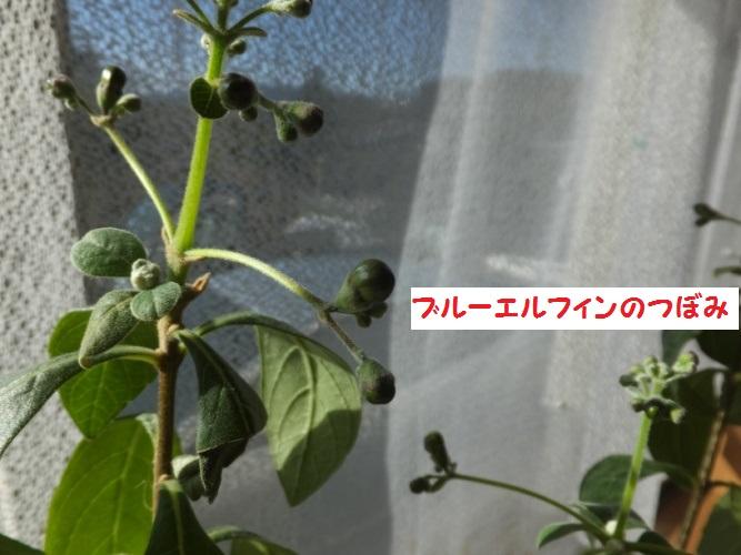 DSCF6216_1.jpg