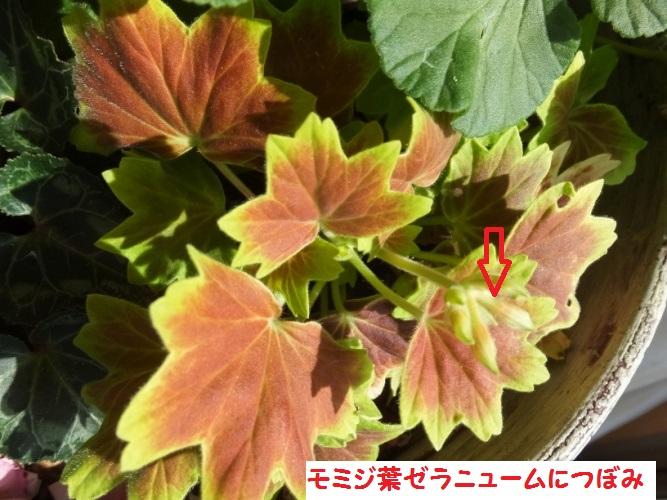 DSCF6219_1.jpg