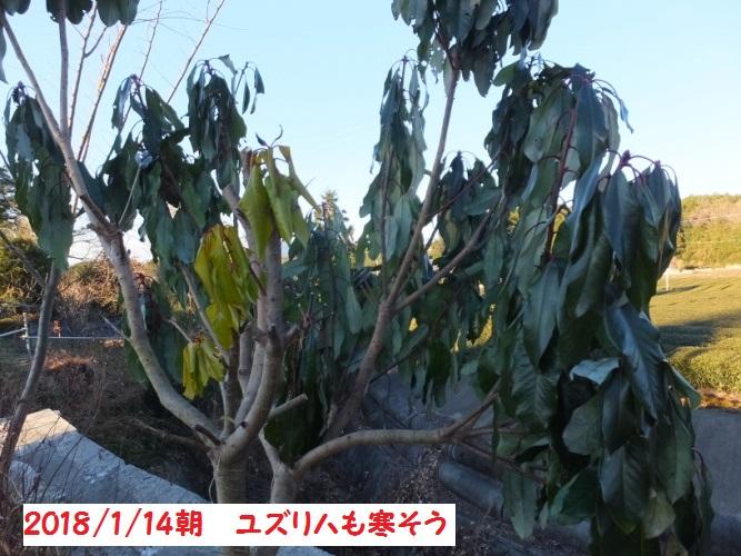 DSCF6484_1.jpg