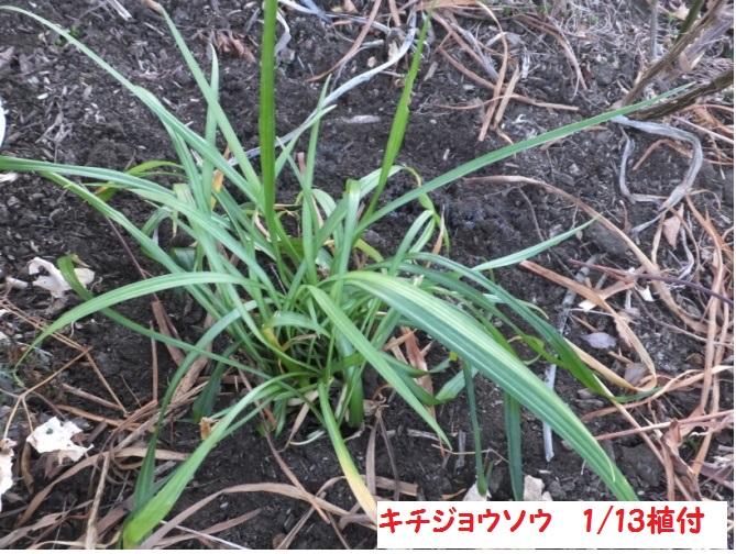 DSCF6485_1.jpg