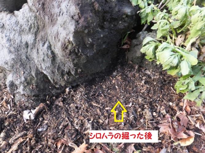 DSCF6635_1.jpg