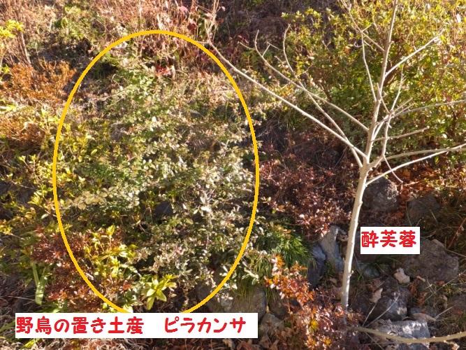 DSCF6936_1.jpg