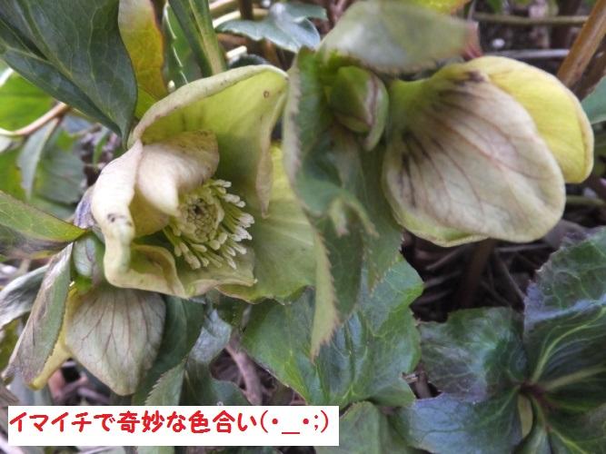 DSCF7540_1.jpg