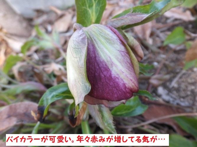 DSCF7543_1.jpg