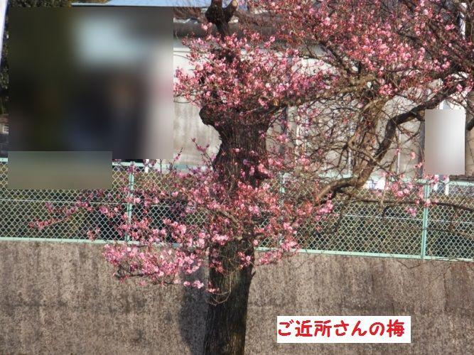 DSCF7546_1.jpg