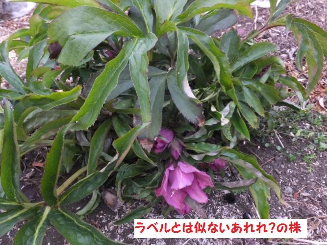 DSCF7564_1.jpg