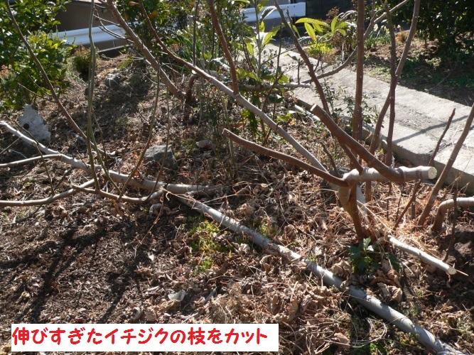 P1380621_1.jpg
