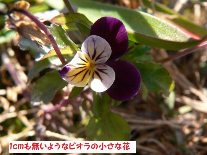 P1380630_1.jpg