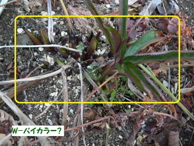 P1380745_1.jpg