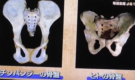 人への進化
