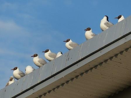 無料画像鳥たち