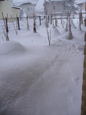 大雪1月・2