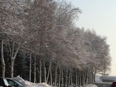 シラカバ樹氷