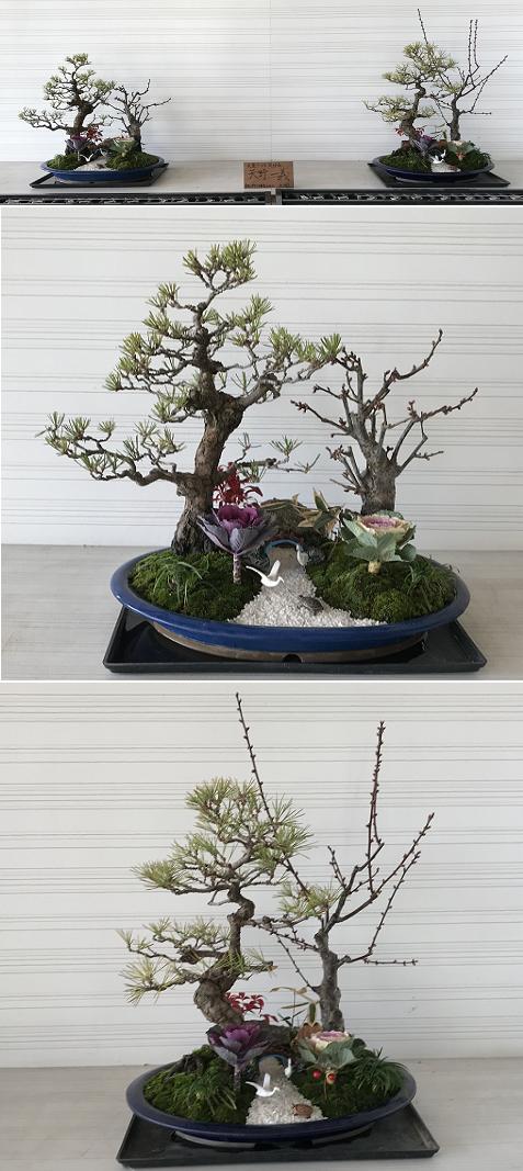 20180108盆栽