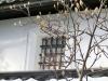 平成30年1月のお花