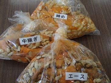 雑司ヶ谷南瓜 採種2