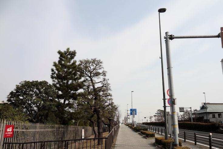180224武庫川の菜の花1