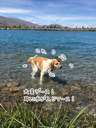 02012018_dog4.jpg