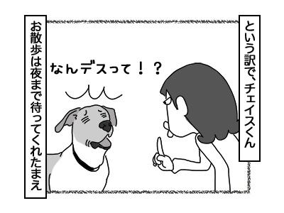 03012018_dog2mini.jpg