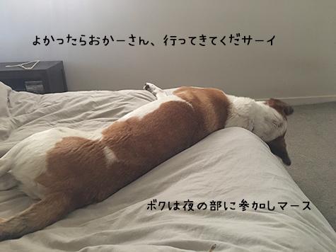 04012018_dog5.jpg