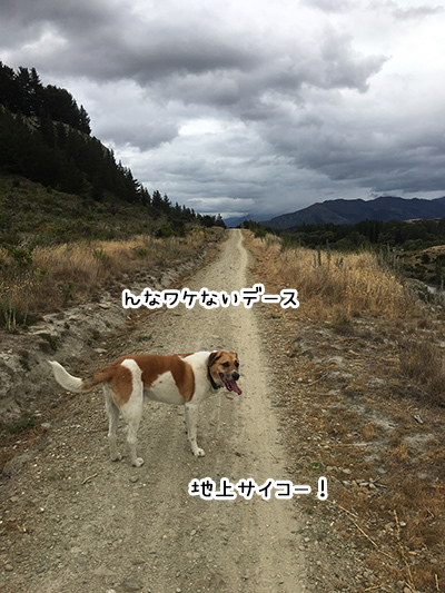 05012018_dog4.jpg