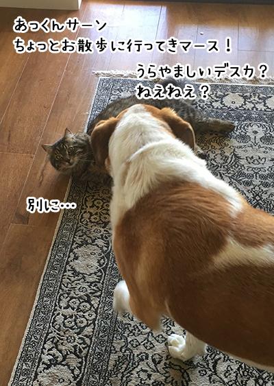 06012018_dog1.jpg