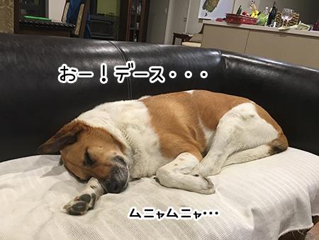 07012018_dog8.jpg