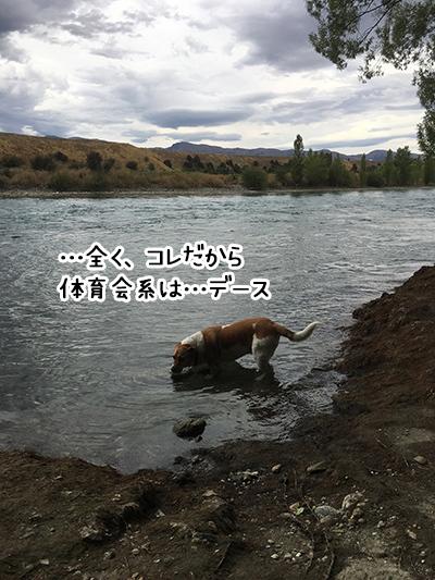 09012018_dog5.jpg