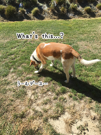 14022018_dog2.jpg