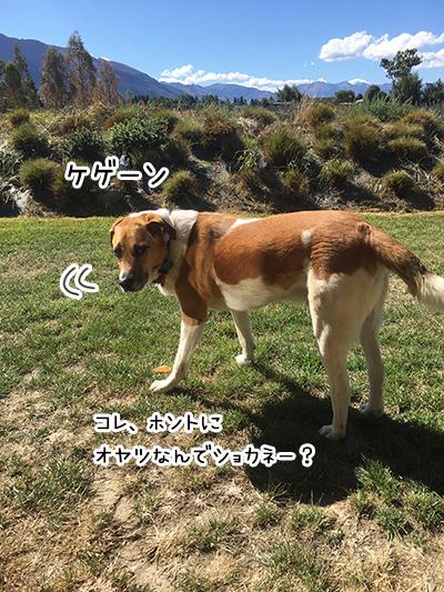 14022018_dog3.jpg