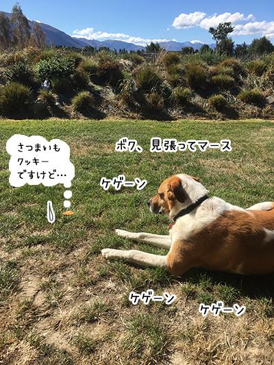 14022018_dog6.jpg