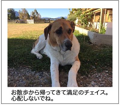 15022018_dog1mini.jpg