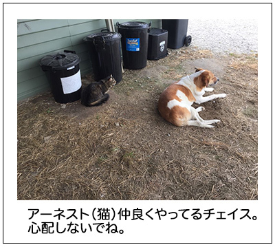 15022018_dog2mini.jpg