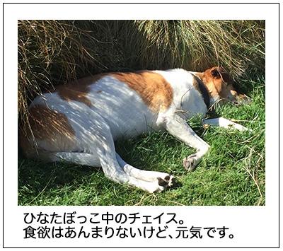 15022018_dog3mini.jpg