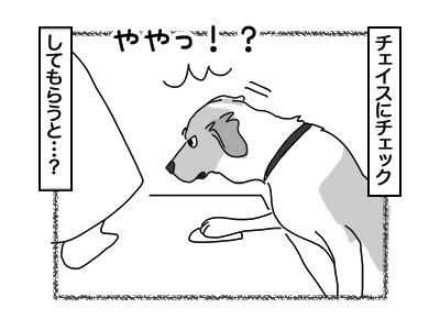 16012018_dog3mini.jpg