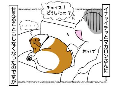 16022018_dog3mini.jpg