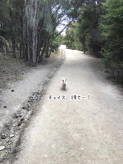 17012018_dog4.jpg