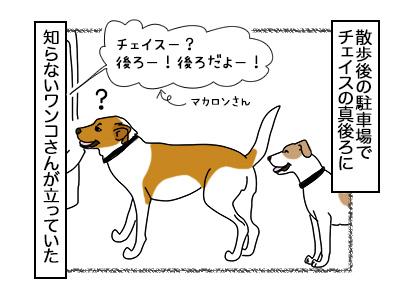 19022018_dog1mini.jpg