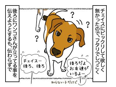 19022018_dog2mini.jpg